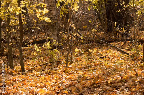 Trees and foliage in the autumn forest