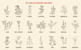 Best herbs for a medicinal garden - 232338411