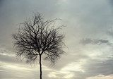 Lonely dead tree - 232383890