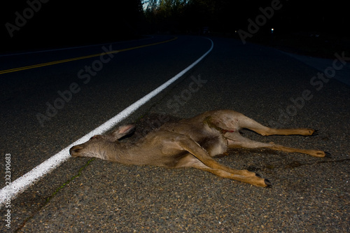 Foto Murales Road Kill