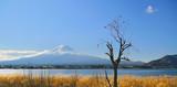 Mount Fuji and Persimmon Tree