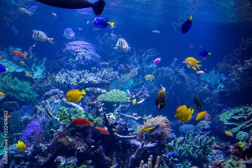 fototapeta na ścianę Aquarium reef
