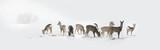 Herd of wild deers isolated in the snow - 232415238