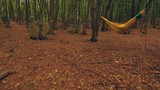 Zooming into a hammock in the woods - glide cam - 232423681