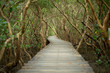 Landscape of mangroves forest with wooden walkway for surveying the ecology