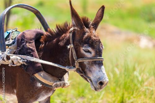 Leinwanddruck Bild Portrait of a donkey in nature