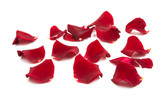 rose petals isolated - 232431096