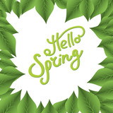 Hello Spring. Leaves - 232435637
