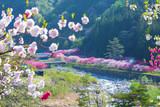 長野県 花桃の里 - 232439417