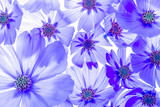 a beautiful floral background from flower petals - 232457846