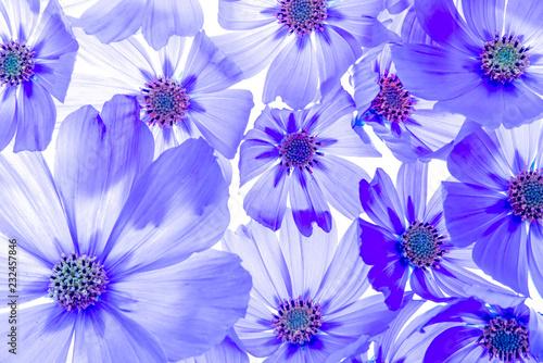 piękny kwiatowy tło z płatków kwiatów