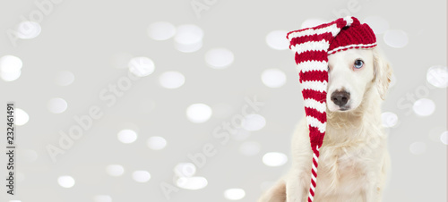 BANNER OF A CUTE CHRISTMAS DOG WEARING A STRIPED RED HAT WITH BLUE EYES. ISOLATED AGAINST GRAY BACKGROUND WITH DEFOCUSED LIGHTS