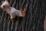 squirrel on a tree - 232462214