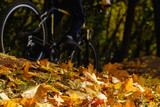 Bike and autumn leaves. Bicycle on ground covered in fallen autumn leaves.