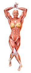 3D Rendering Female Anatomy Figure on White © photosvac