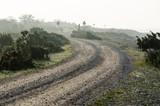 Misty winding gravel road - 232503896