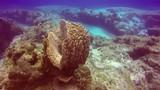 Mexico, Scuba, Diving, Sea, life, ocean, water, diver, underwater, filming, video, film. - 232532452