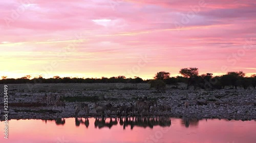 Reflection of a group of zebras silhouette in Okaukuejo waterhole at sunset. Namibia. African Safari.