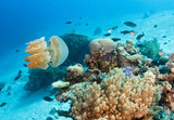 Jellyfish on reef - 232548614