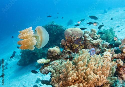 Foto Murales Jellyfish on reef