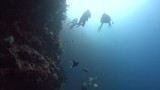 scuba divers and school of fish - 232569076