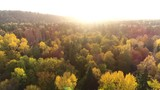 Aerial drone low shot of forests with yellow leaves in autumn during sunset - 232573292