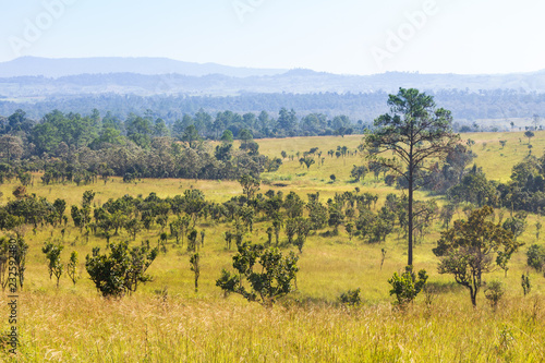 fototapeta na ścianę Thung salaeng Luang National Park . Savannah field and pine tree . Phetchabun and Phitsanulok province . Northern of Thailand . Landscape view