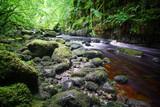 Nordirland Rundreise / Natur /Landschaft  - 232596419