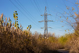 Autumn vegetation on the background of the electric pole - 232621623
