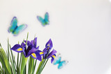 Purple irises on a white background