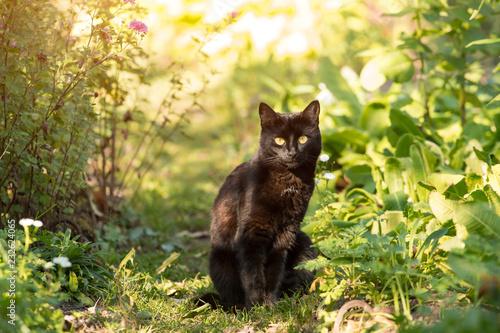 Czarny kot siedzi outdoors w ogródzie w świetle słonecznym