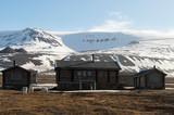 Renne, Longyearbyen, archipel du Spitzberg, Svalbard - 232624639