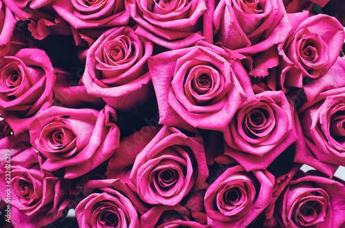 Piękne różowe róże tło
