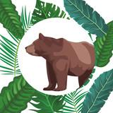 Bear wild animal - 232636221