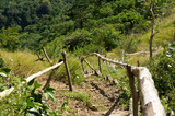 Bamboo Handrail on Sloppy Footh Path