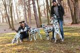 Dog walkers with Dalmatian dogs enjoying in park.