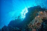 diving in colorful reef underwater in mexico cortez sea cabo pulmo san lucas