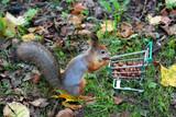 Squirrel - 232652463