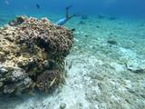 Snorkel en Cozumel II