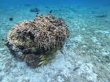 Snorkel en Cozumel II - 232658622