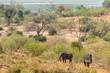 Blick von einem Hügel auf den Chobe River, Elefanten kehren vom Fluss zurück, Botswana