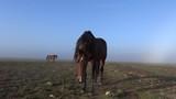 Jeunes chevaux sur le communal. - 232669484