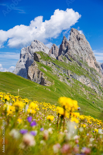 Wall mural Dolomites Alps in springtime, green grass and flowers, Seceda mount in background. Trentino Alto Adige, Italy