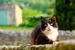 Chat noir et blanc avec les yeux jaunes gros plan dans la rue. - 232683290