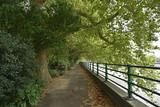 Thames path and Thames river along Bishop's Park in Fulham, London, U.K