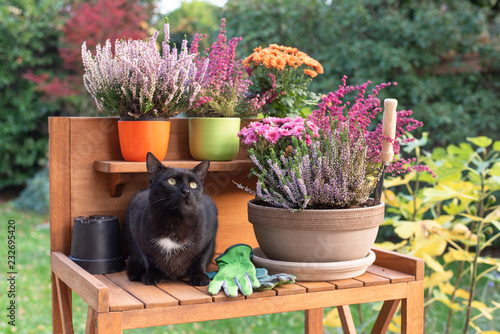 Poster Cat planting autumn flowers