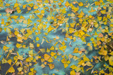 Autumn yellow fallen leaves lie on the water polluted by chemical waste. - 232703462