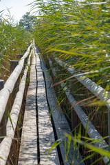 wooden path thru the reeds lake © Silga