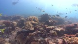 Colorful coral reef and divers - 232714869