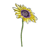 Drawing daisy flower. Floral hand drawn botanical element illustration. Vector.